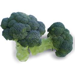 Yüksel Tohum - Kaftan Brokoli Tohumu